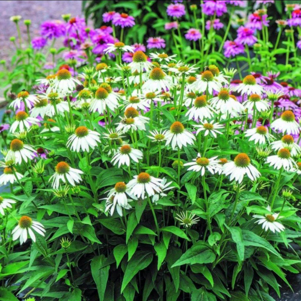Eco Garden in July