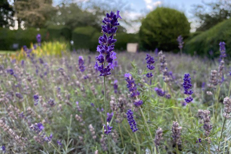 Tips for Your Eco Garden in September