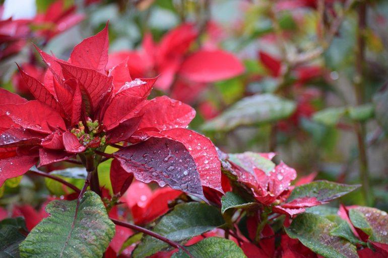 Eco Garden for December