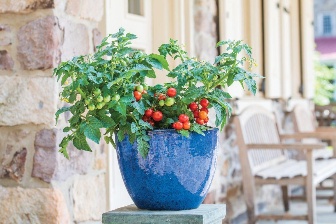 Grow Your Own Refreshing Vegan 'Tomato Granita'