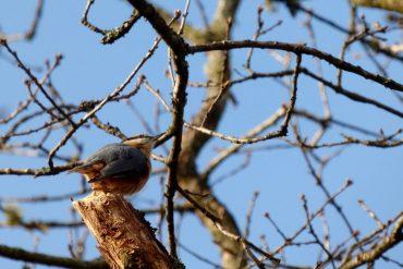 Eco Garden February