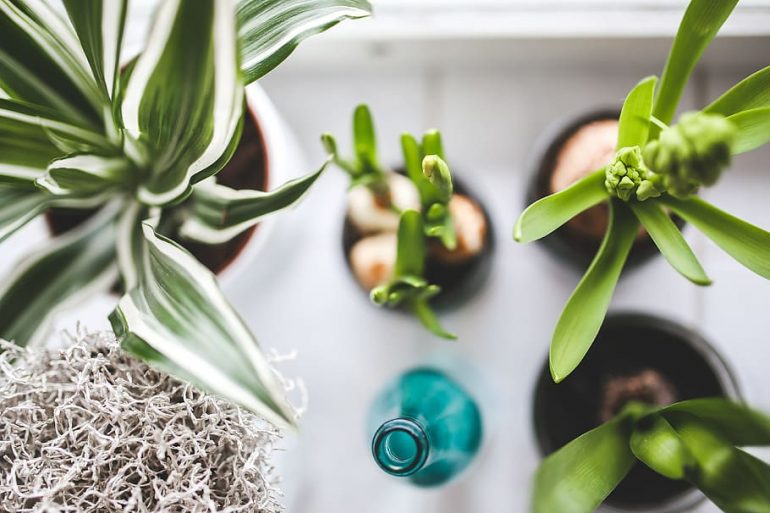 A Guide to Caring for Houseplants