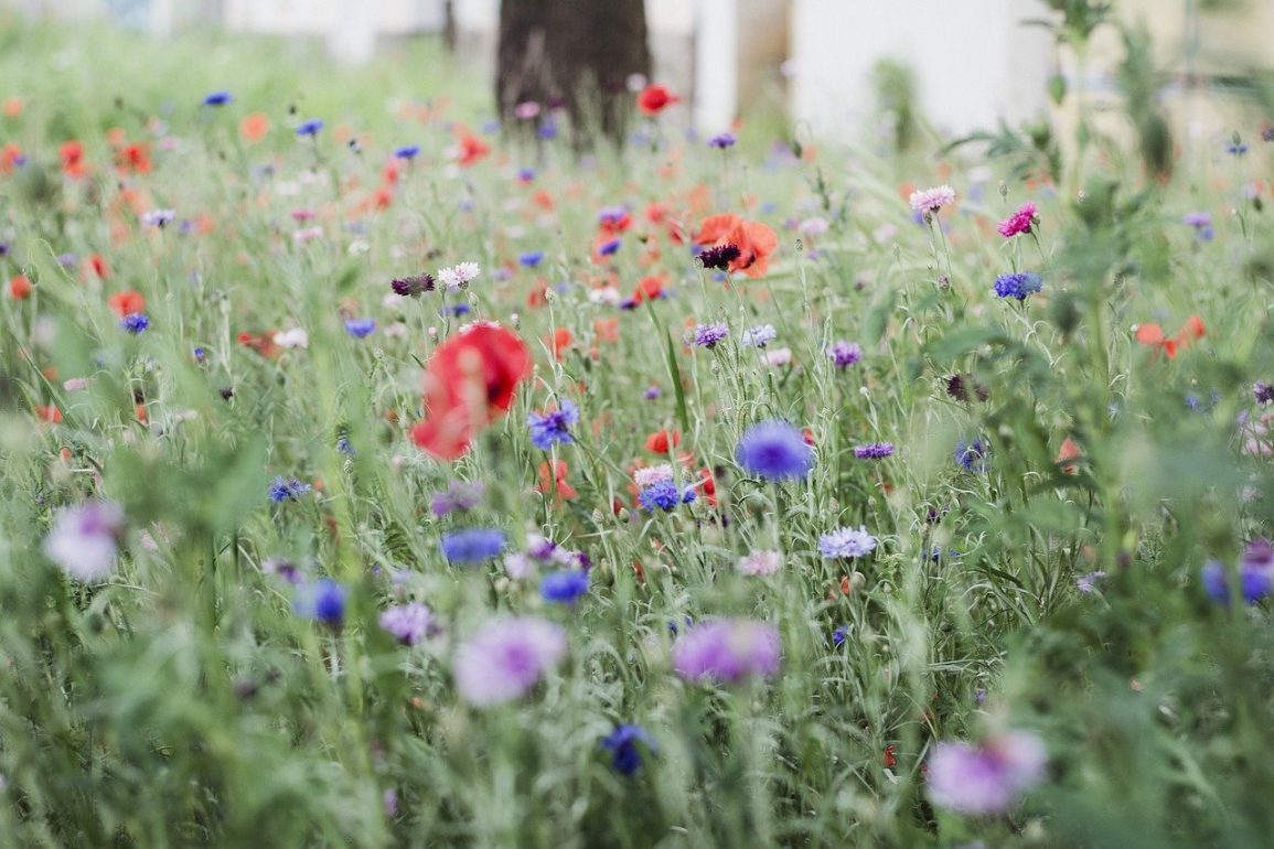 Tips for Your Eco Garden in May