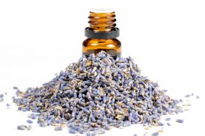 10 Antibacterial Essential Oils You Must Use