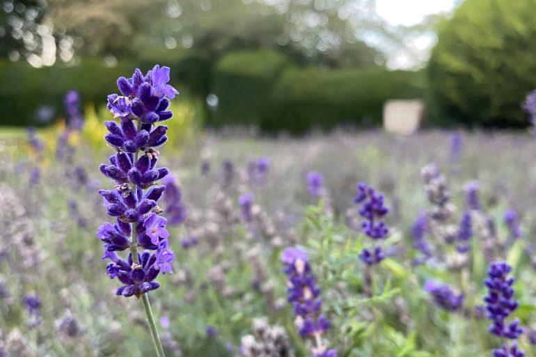 5 Health Benefits of Aromatherapy