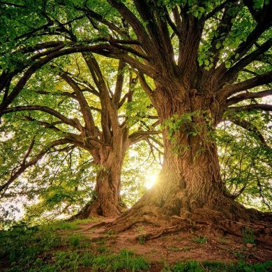 Save Trees and Improve your Health