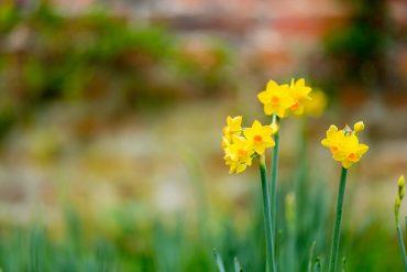 Easter at Hampton Court Palace