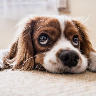7 Signs That Your Dog Has Joint Pain and What to Do If They Do
