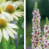 How To Sow Inner Peace With The Quiet Garden