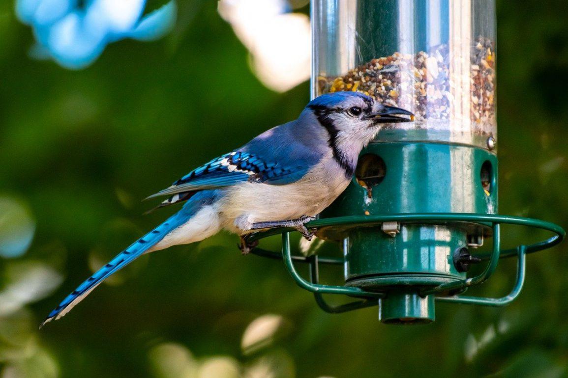The Benefits of Birds in Your Garden