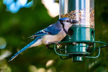 The Benefits of Birds in Your Garden