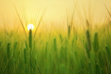 4 facts about wheat intolerance