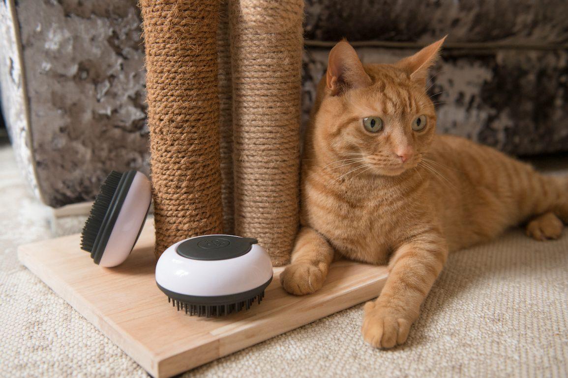 Kuba & Leia for Feline Wellbeing